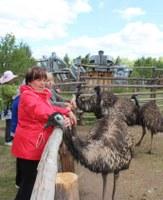 Граждане пожилого возраста и инвалиды Уйского района побывали на экскурсии в «Долине страусов».